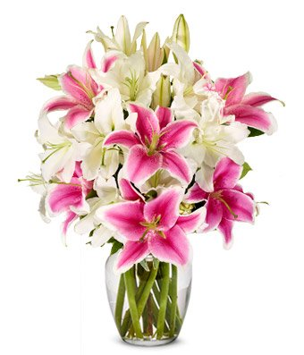 Classic Lilies - Same Day Sympathy Flowers Delivery - Condolence Flowers - Funeral Flower Arrangements - Sympathy Plants by eshopclub