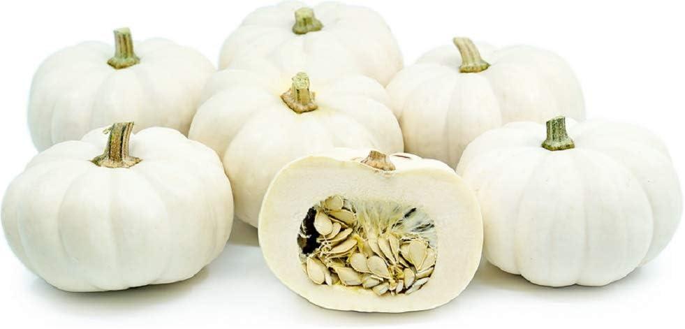 David's Garden Seeds Pumpkin Mini Casperita 3076 (White) 25 Non-GMO, Hybrid Seeds