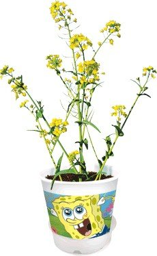 SpongeBob's Silly Sprouts Super Fast Rocket Plant Nickelodeon Terrarium Kit