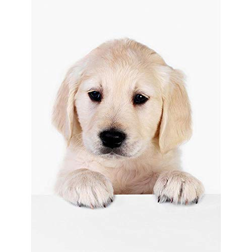 pictures of cute puppies - 8