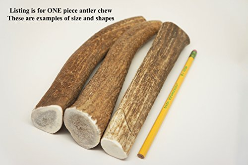Elk Rawhide - ONE (1) Extra Large Sized Elk Antler Chew Bone for Large Dogs, 9