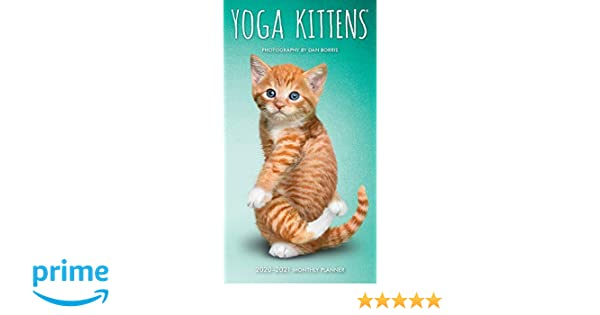 Yoga Kittens 2020 3.5 x 6.5 Inch Two Year Monthly Pocket ...