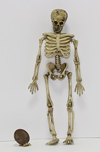 Dollhouse Miniature Halloween Aged Skelton with Jointed Hip for Dollhouse Display