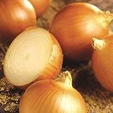 green onion bulbs - Patterson Onion 200 Seeds #0616 Item Upc#650348692032