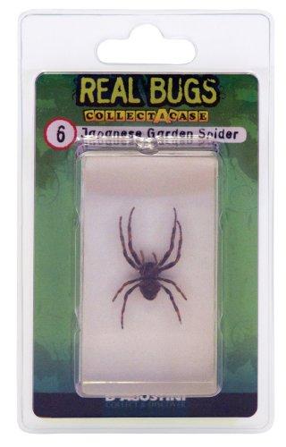 DeAgostini Real Bugs Japanese Garden Spider Bug