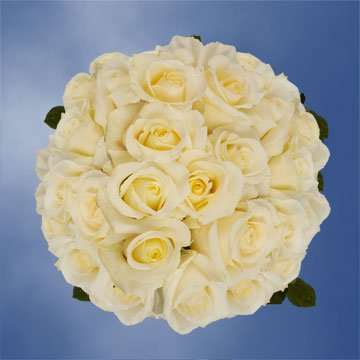 GlobalRose 150 Fresh Cut White Wedding Roses Long Stem - Blizzard Roses - Fresh Flowers Wholesale Express Delivery - Perfect for Weddings, Anniversary or any occasion.