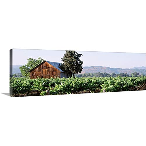 Oakville Napa Valley - GREATBIGCANVAS Gallery-Wrapped Canvas Entitled Old barn in a Vineyard, Napa Valley, Oakville, Napa County, California, by 60