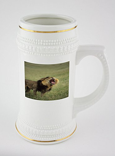 beer-mug-with-lion-panthera-leo-yawning-in-a-field-maasai-mara-national-park-kenya