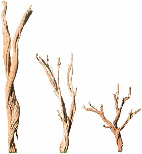 DriedDecor/CuriousCountryCreations 两个任选其一 Ghostwood Branches - Sandblasted Case of 15 Branches - 24-30 inch ()