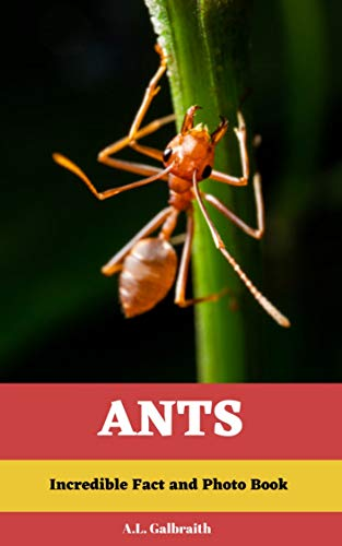 Ants: Incredible Facts and Photo Book: Reading and Learning Kids animal book (Readers 1) -