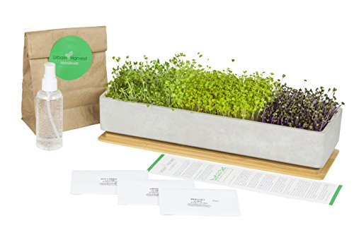 Urbain Harvest Concrete Bamboo Microgreens Kit – Unique Design Window Box and Indoor Kitchen Centerpiece. Easy to Grow Your Own Organic Non-GMO Microgreens, Superfood, Herb Garden. Harvest 7-10 days
