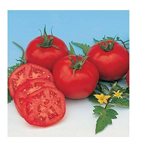 Dried Tomatoes Recipe - David's Garden Seeds Tomato Slicing Moskvich SL756A (Red) 50 Organic Heirloom Seeds