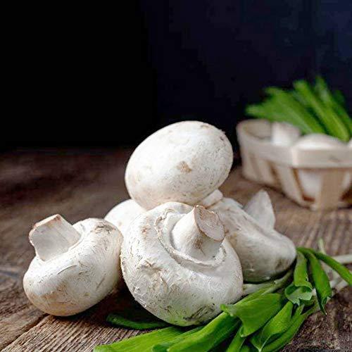 200PCS White Button Mushroom Seeds Delicious Vegetable Seed Natural Non-GMO Organic - Mushroom White Button