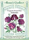 Sweet Pea - Fragrant Zinfandel Seeds