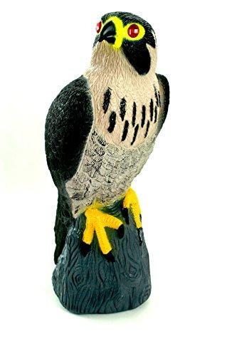 Bird-X Falcon Predator Decoy Bird Scare (A Peregrine Falcon Dives At A Pigeon)