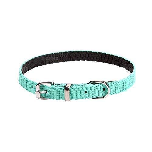 Dingo Dog Collar Handmade Mint with Black Contrast 14580