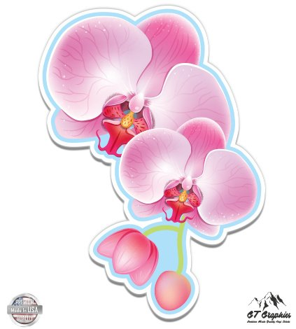 Beautiful Orchids - 8