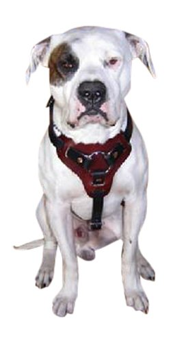 Dog Harness Premium Leather for Walking Easy Training Large, Medium and Small Dogs. Individually Hand Crafted. (2 Tone: Mahogany Chest Black Straps, M) by BlackJacks Leather