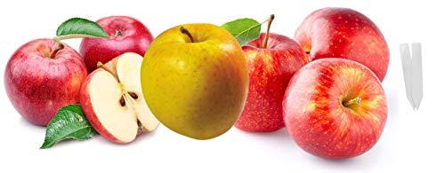 - Jays Seeds Bulk 3 Apple Tree Seeds Survival Seeds 230 Apple Seeds + 5 Free Plant Markers