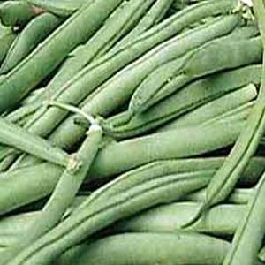 Bean - Bush Tendergreen Improved Organic