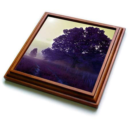 - 3dRose Stamp City - nature - Photo of an old oak tree in an open field covered in a purple haze. - 8x8 Trivet with 6x6 ceramic tile (trv_292988_1)