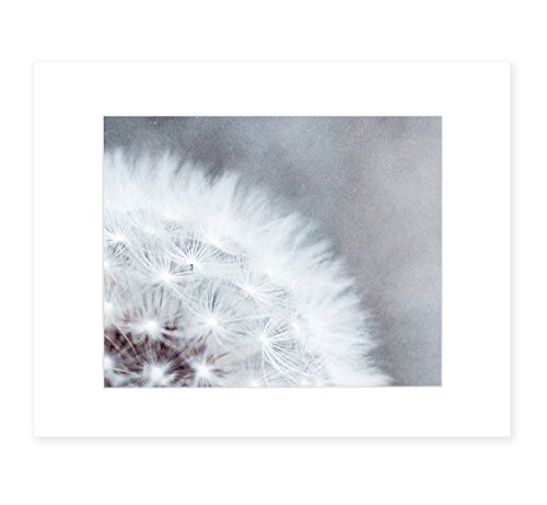 Botanical Wall Art, Dandelion Floral Photography, Wild Flower Nature Decor, 8x10 Matted Photo Print, (fits 11x14 frame) 'Dandelion Queen' ()