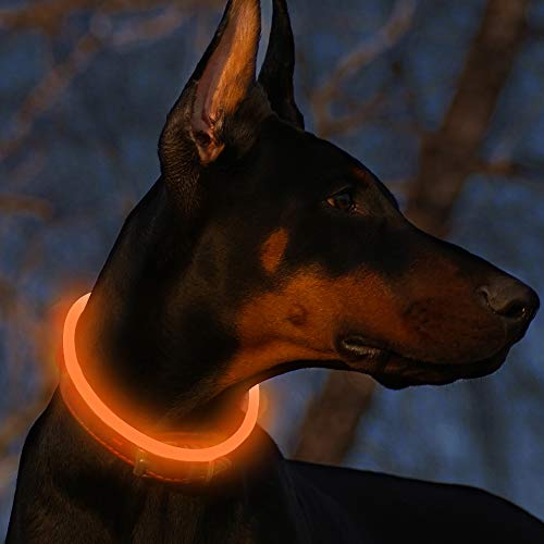 BSEEN LED Dog Collar - Cuttable Water Resistant Glowing Dog Collar Light Up, USB Rechargeable or Battery Powered Pet Necklace Loop for Dogs (USB Rechargeable-70cm [L,Can be cuttable], Orange)