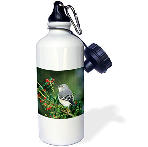 3dRose Danita Delimont - Mockingbird - Northern Mockingbird in China Holly, Marion County, Illinois - 21 oz Sports Water Bottle (wb_250955_1) ()
