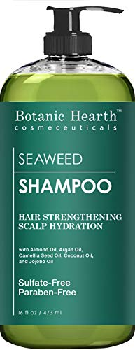 Botanic Hearth Seaweed Hair Shampoo, Superior Hydrating and Hair Growth Promoting Shampoo, Paragon and Sulfate Free Shampoo for Men and Women, 16 fl oz (Best Shampoo For Thin Dry Frizzy Hair)