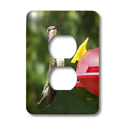 3dRose lsp_21071_6 Female Ruby Throated Hummingbird 2 Plug Outlet ()