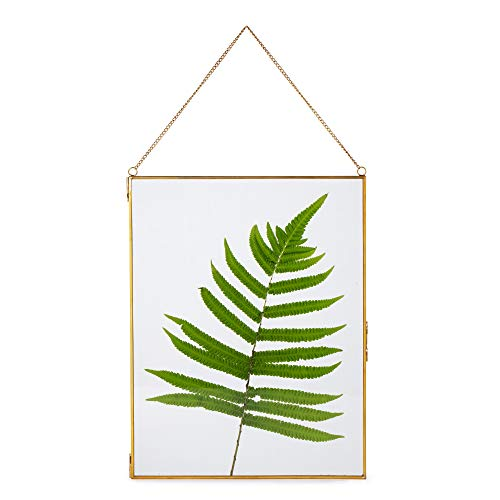 NCYP Large Wall Hanging Brass Glass Artwork Certificate Photo Picture Display Frame Geometric Ornament Plant Specimen Clip Modern Vertical Decor Card Holder Medium, Glass frame only