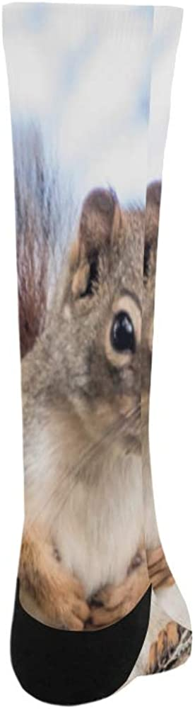 Northern Red Squirell Wild Polyester Crazy Warm Crew Soccer Compression Knee High Dress Troser Sock For Men Women Kids And Toddler Botts Shoes Outdoor Use Machine Washable