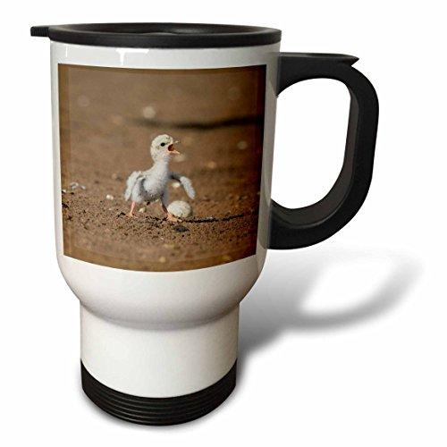 3dRose Danita Delimont - Baby animals - Least Tern young tern calling, Port Isabel, Laguna Madre, Texas - 14oz Stainless Steel Travel Mug - Laguna Mug Stainless Steel