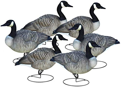 Final Approach Livecraft Full Body Canada Goose 6 Pack Canada Goose Relaxed/Walker Full Decoys