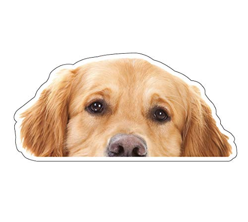 Crazy Discount Golden Retriever Dog Peeper Vinyl Sticker Decal Outside Inside Using for Laptops Water Bottles Cars Trucks Bumpers Walls, 3.5
