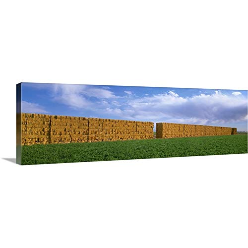 (GREATBIGCANVAS Gallery-Wrapped Canvas Entitled Stacks of Alfalfa hay Bales with Alfalfa Field in The Foreground by Timothy Hearsum 48