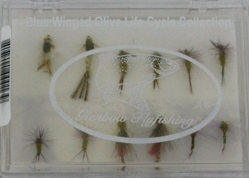 Blue Winged Olive Life Cycle Collection