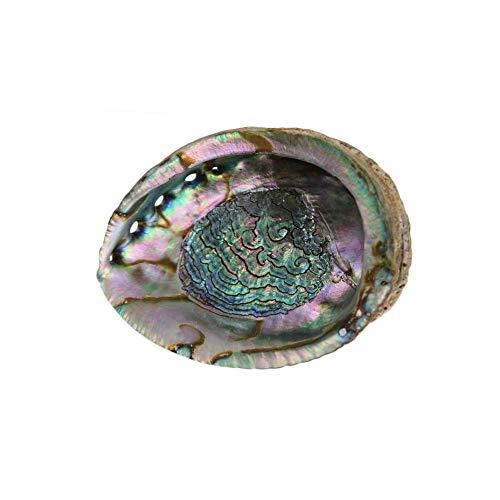 - Large Green Abalone Shell 6