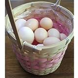 孵化用有精卵 白烏骨鶏の卵 54個入り