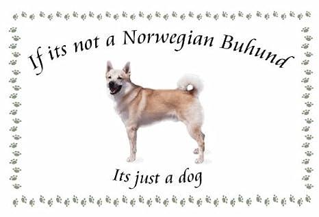 Noruegos Buhund - diseño de Llaveros de perro - Si su no ...