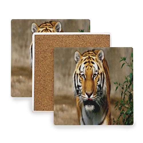 (Large Square Drink Coasters,Wild Animal Tiger Ceramic Thirsty Stone With Cork Back Cup mats Protect Your Furniture From Spills, Scratches,Water Rings and Damage 4pcs)