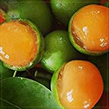 Lemon Sweet Spanish Lime Tree Seeds, 10 seeds, professional pack, green skin orange inside juicy fruits