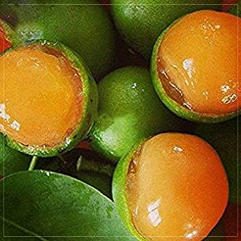Amazon.com : Lemon Sweet Spanish Lime Tree Seeds, 10 seeds ...