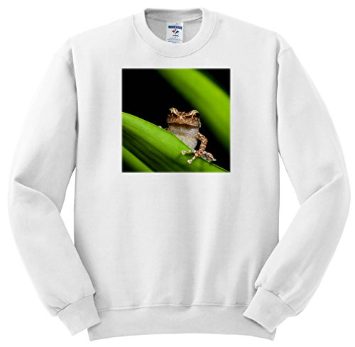 Price comparison product image 3dRose Danita Delimont - Frogs - Common Coqui On Bromeliad Leaf, EL Verde, EL Yunque NF, Puerto Rico - Sweatshirts - Youth Sweatshirt Large(14-16) (SS_277166_12)