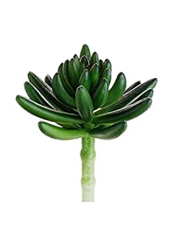 "Artificial Spike Aeonium Pick in Green5"" Tall"