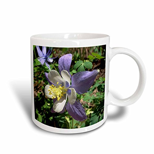 (3dRose Columbine Flower Ceramic Mug, 11-Ounce)