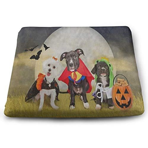 Ladninag Hipster Puppy Dog Dressed in Halloween -