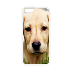 DANGDANG Cute Dog Shell Phone for iphone6 Plus White Cover Phone Case [Pattern-1]