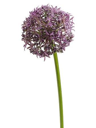 Amazon 31 silk allium flower spray lavender pack of 12 31quot silk allium flower spray lavender pack mightylinksfo