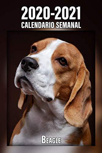 2020-2021 Calendario Semanal Beagle: 221 Páginas | Tamaño A5 | 24 Meses | 1 Semana en 2 Páginas | Planificador | Agenda Semana Vista | Canófilo | Perro | En Español (Spanish Edition)